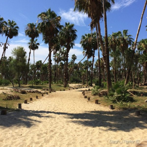 Estero San Jose - TFC Travels: San José del Cabo http://wp.me/p2Bw44-4DS #travel @TheFitCookie #Mexico #vacation