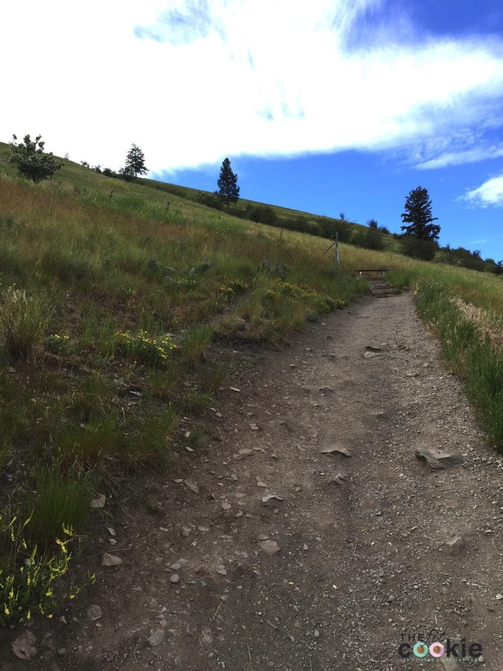 The M Trail Missoula - @thefitcookie #hike #montana #trail #fitfluential