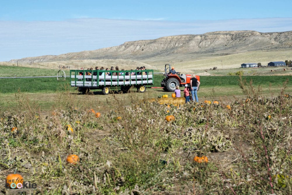 Pumpkin picking at the Koltiska Pumpkin Patch in Sheridan WY - @thefitcookie #wyoming #fall #family