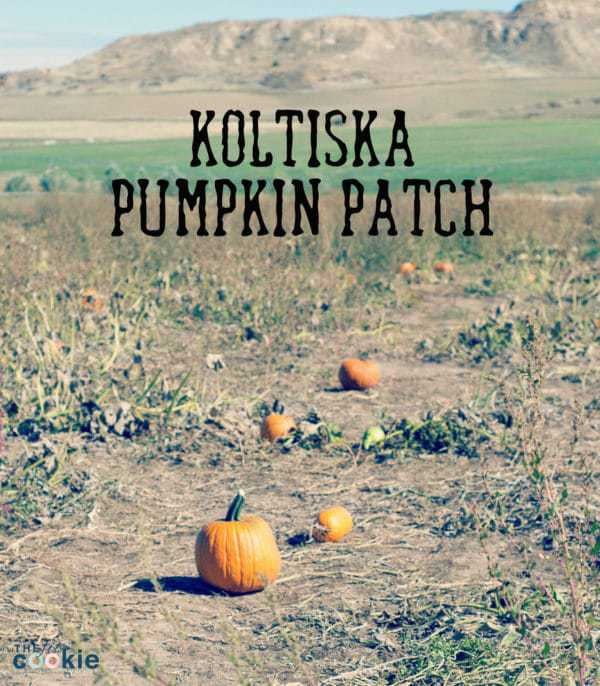 Koltiska Pumpkin Patch