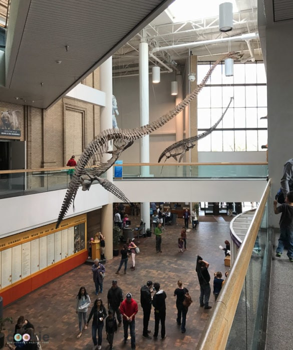 Main hall of the Denver Museum of Nature and Science - @TheFitCookie