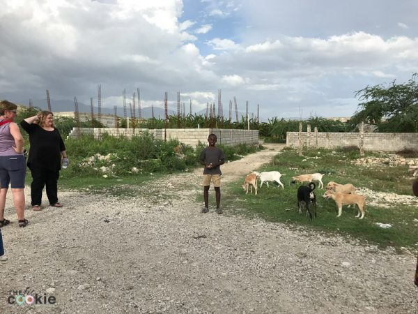 dogs and goats in front of an unfinished home in Haiti
