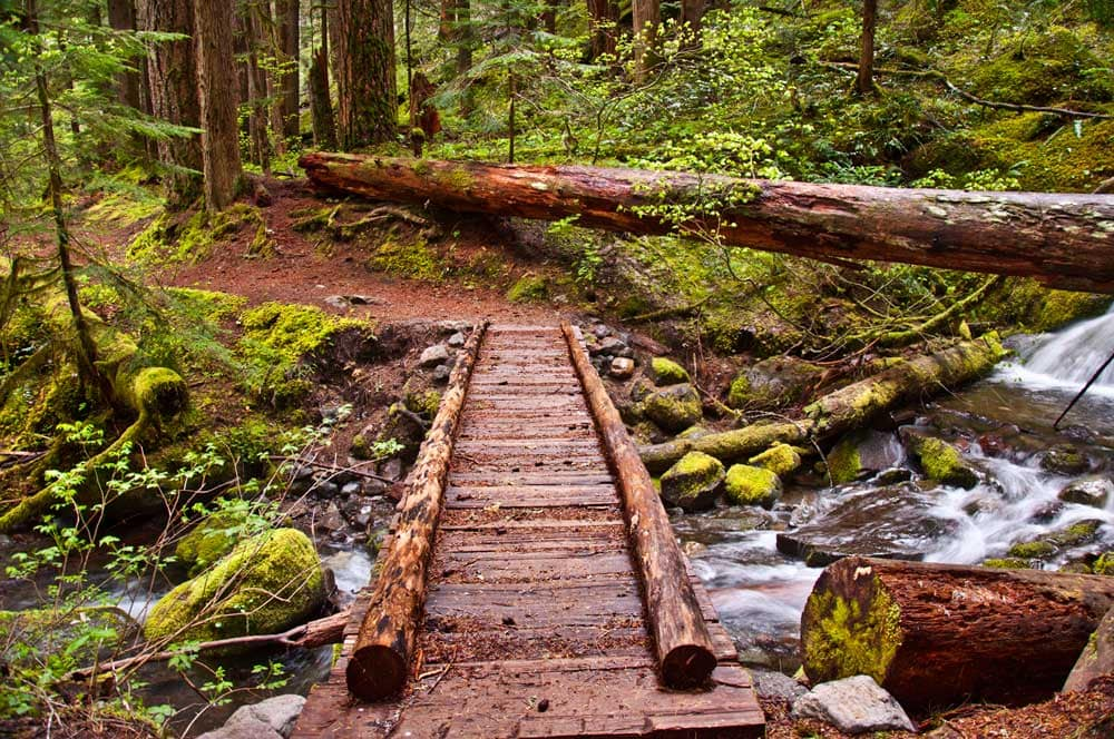wood foot bridge over a creek in the forest
