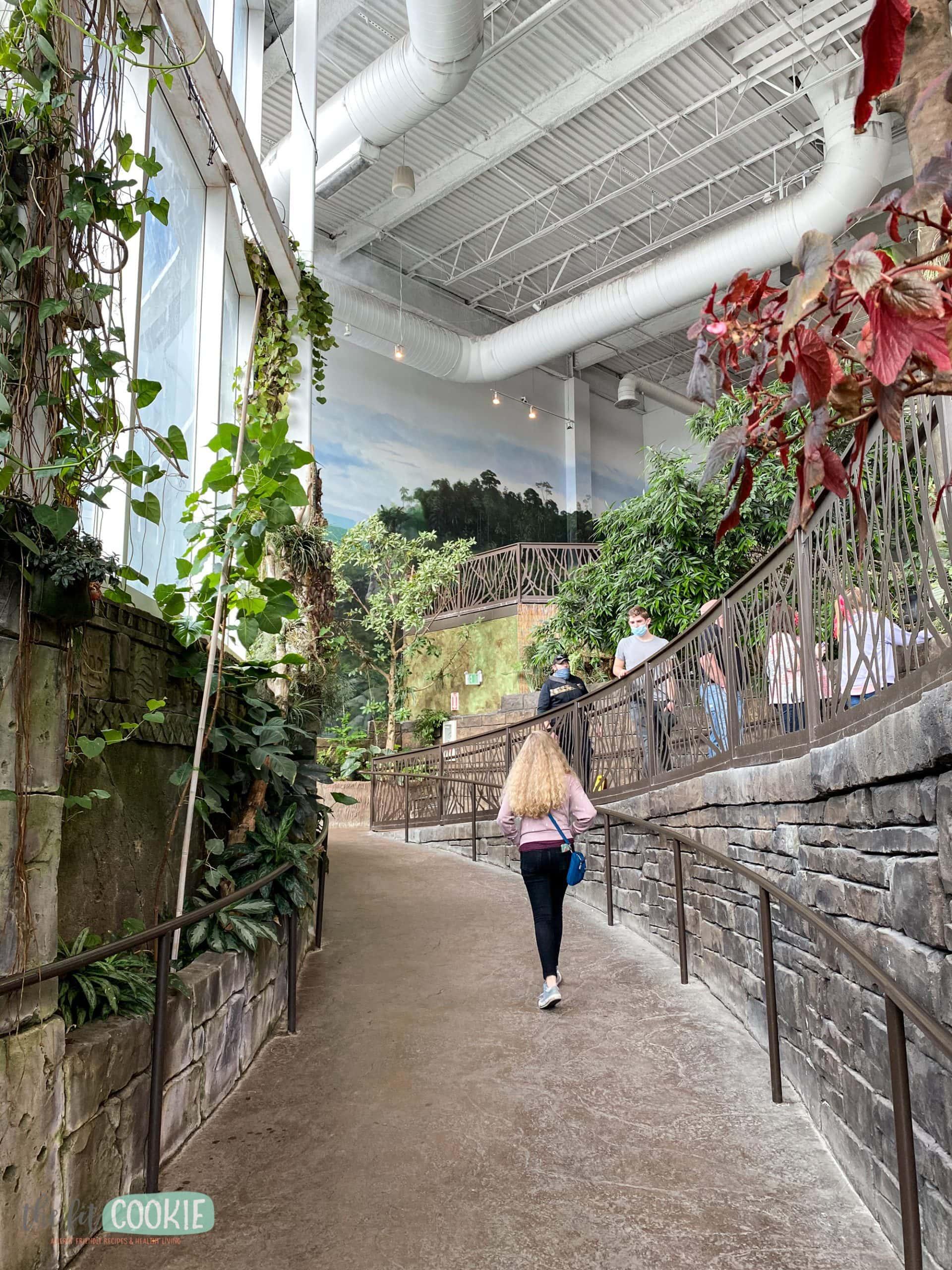 Journey to South America at Living Planet Aquarium