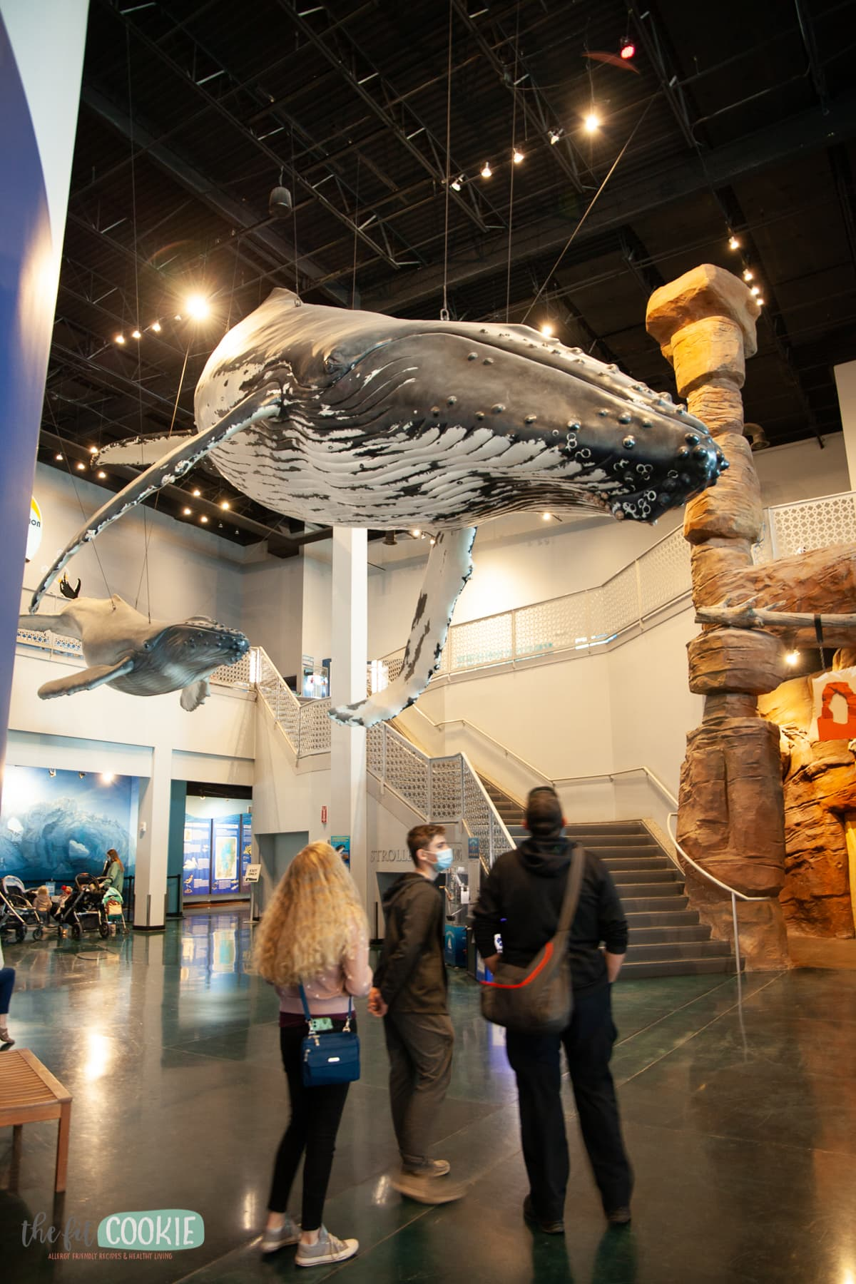 foyer of living planet aquarium