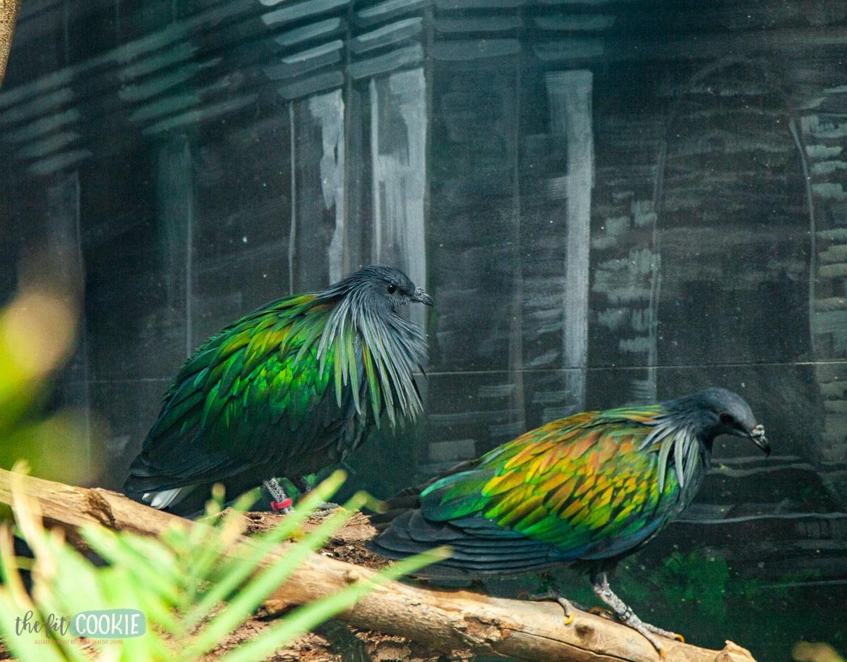 Asian pheasants at Living Planet Aquarium