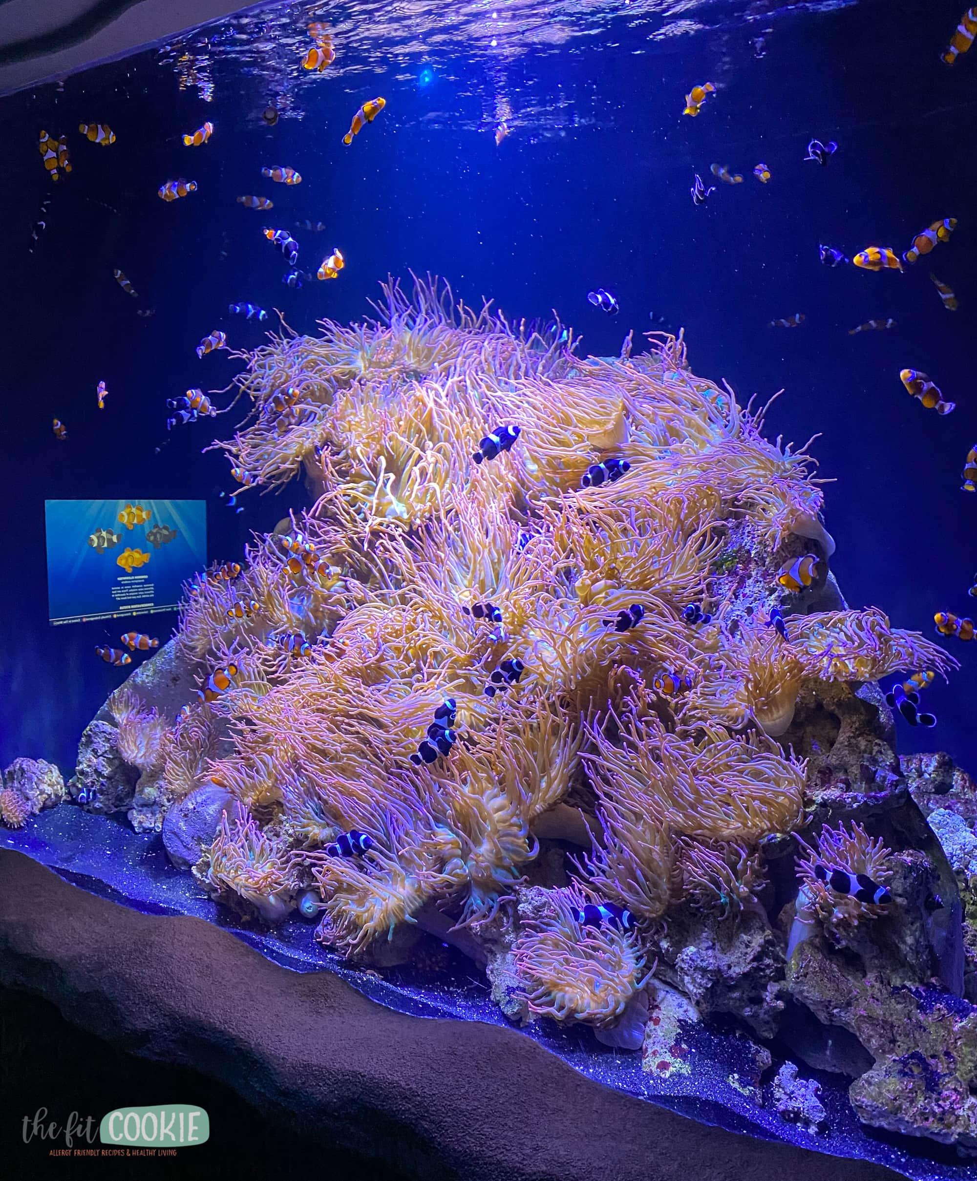 clownfish exhibit at Living Planet Aquarium