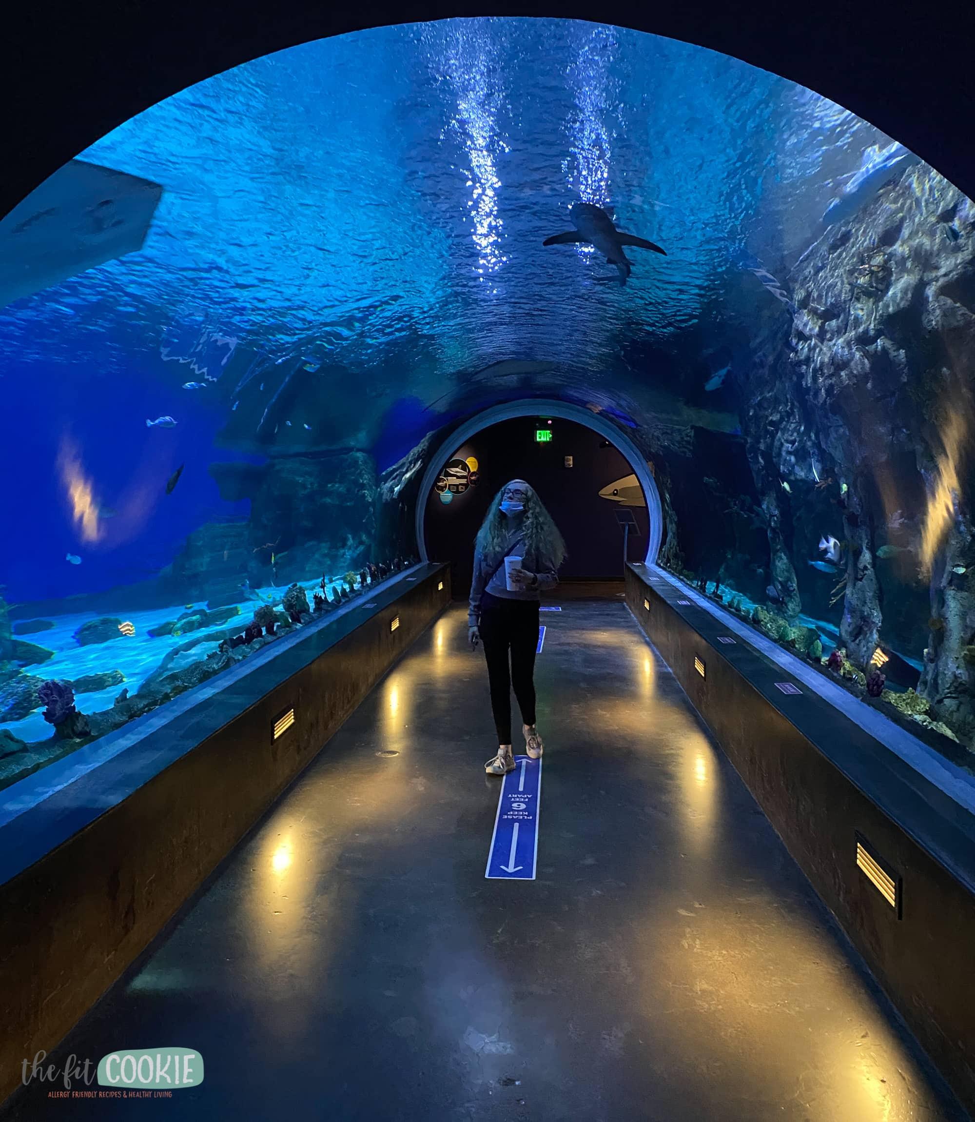 aquarium tunnel at Living Planet Aquarium
