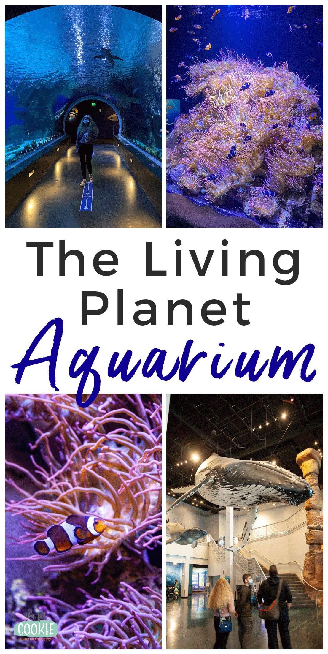photo collage of living planet aquarium